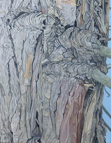 Cypress tree 3