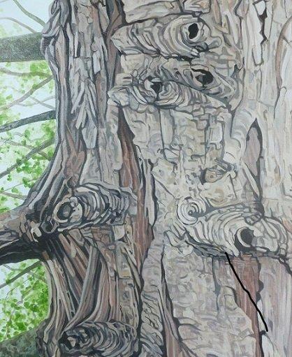 Cypress tree 9