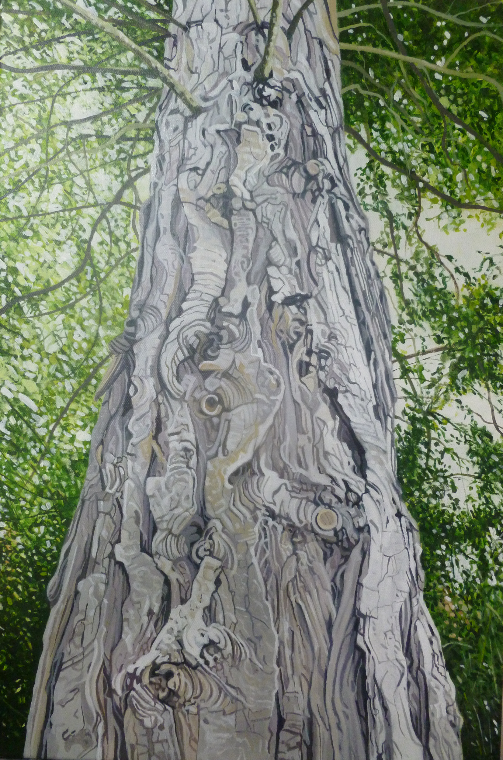 Cypress bark, Dartington